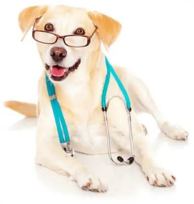Doenças comuns em cães