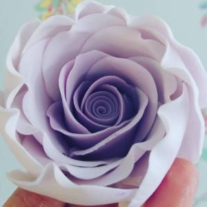 sugar-rose