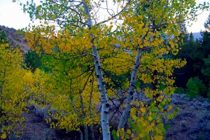 Parker Lake Trail (9/14/14) Alicia Vennos/Mono County Tourism