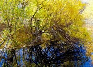 Lower Rock Creek  (10/26/14) Alicia Vennos