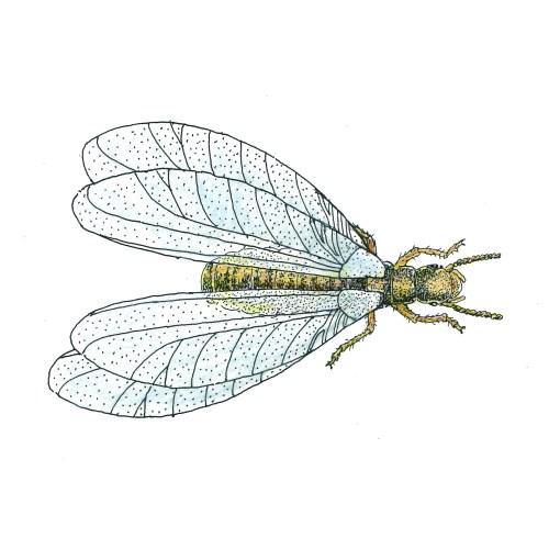 Medium Crop Of Peachtree Pest Control