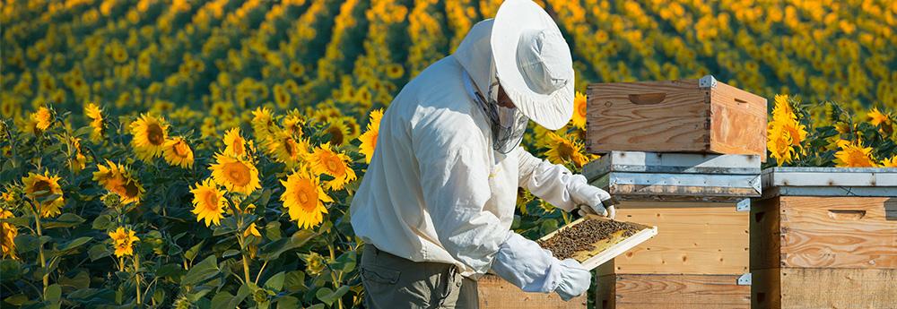 apiland-la-camara-cu-merinde-tonicul-apicultorului