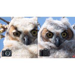 Small Crop Of Nikon D500 Vs D750