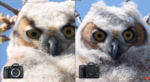 Medium Of Nikon D500 Vs D750
