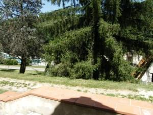 Vue de la terrasse, le chalet est protégé par la nature sur un emplacement de 280 m²