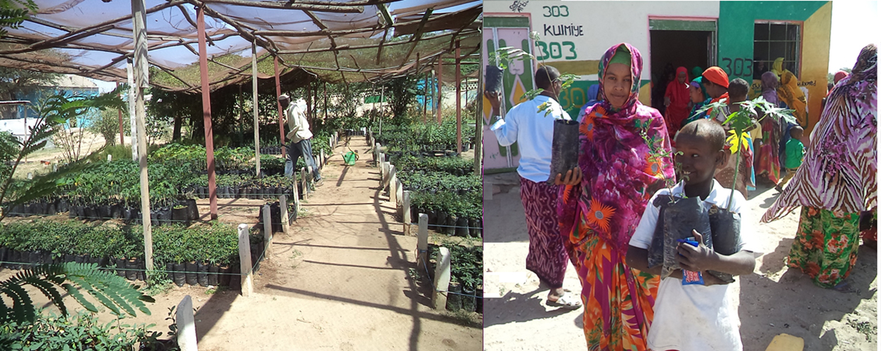 Hargeisa Nursery extension and seed distribution