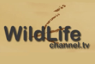 Wildlife-Channel