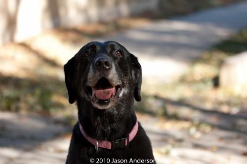 Dog Portrait @ 70mm Sigma 70-200 f2.8