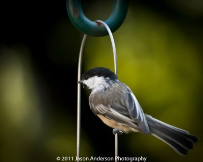 Avian Photography 1