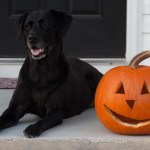 maggie_pumpkin