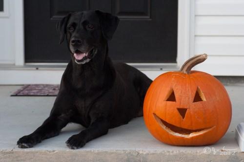 maggie_pumpkin