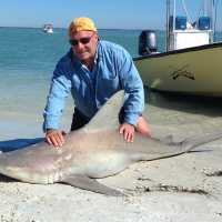 Captiva Fishing Report: Sandbar shark ~ Sanibel, Captiva, North Captiva, #Captiva