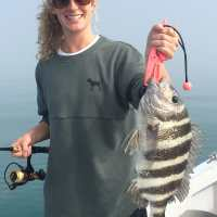 Captiva Fishing Report: Sheepshead ~ Sanibel, Captiva, North Captiva, #Captiva