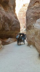 Horse and carriage in Petra