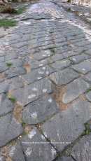 Muddy paw prints on the ancient stones of Umm Qais