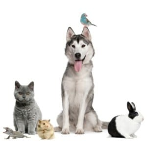 The Career Academy Introduction to Pet Care - A dog with a budgie on it's ear, cat, rabbit, guinea pig and lizard