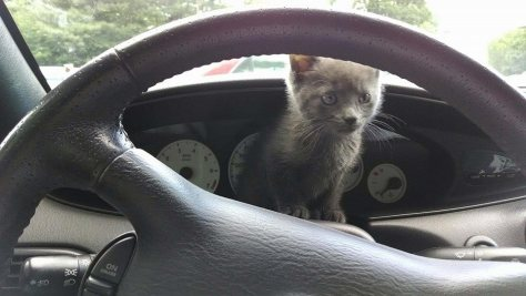 Slate as a kitten on my Sebring dash