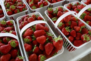 Strawberries are in season at North Carolina farms. Photo courtesy of N.C. Dept. of Agriculture and Consumer Services.