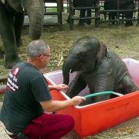 Badezeit für Baby-Elefant