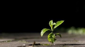 growth, survival, business, development,