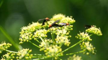 Spring, bugs, lovebugs, springtime, bug removal
