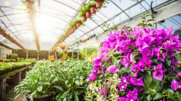 Greenhouse, plants, garden, flowers, flower, green house, gardening