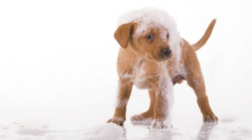pet wash, dog wash, multi-profit center, dog grooming, self-serve