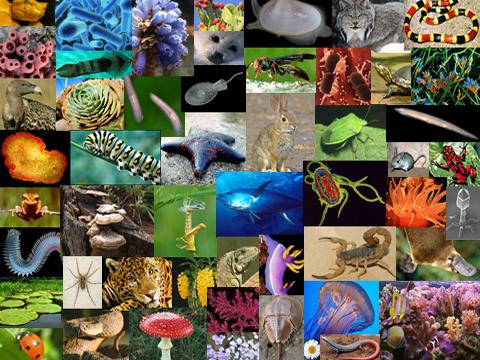 Diversidade dos seres vivos e ontogenia