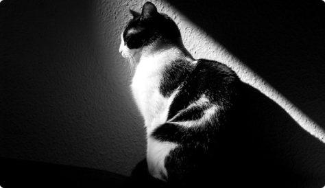 Come organizzare le vacanze con il gatto