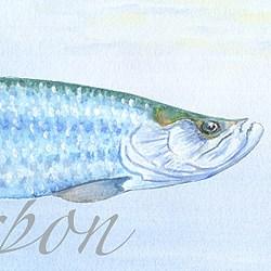 Casart Element: Tarpon no. 7 – Gulf Coast Design_ water and wording mural