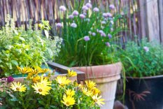 Haven bugner og viser sig fra sin bedste side