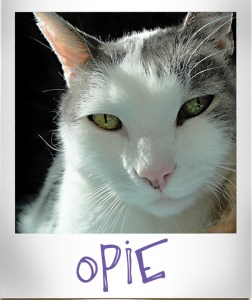 Opie, the black and white feline star of Catberry Tails.