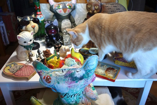 Melvin, the cat, jumps on the table with the collectibles