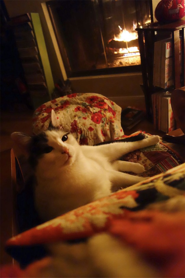 Wally is resting in front of a roaring fire in a very comfy chair.