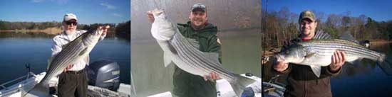 Winter lake Lanier Stripers.