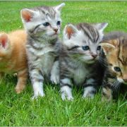 A Cat Family and the Surprises of God's Love