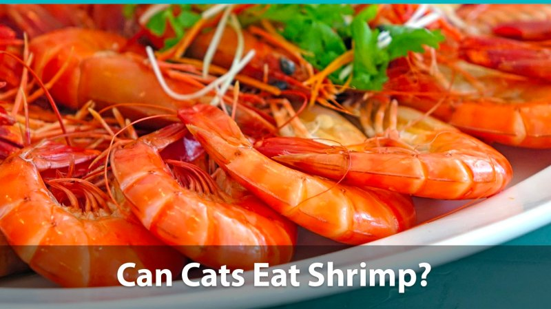 Large Of Types Of Shrimp