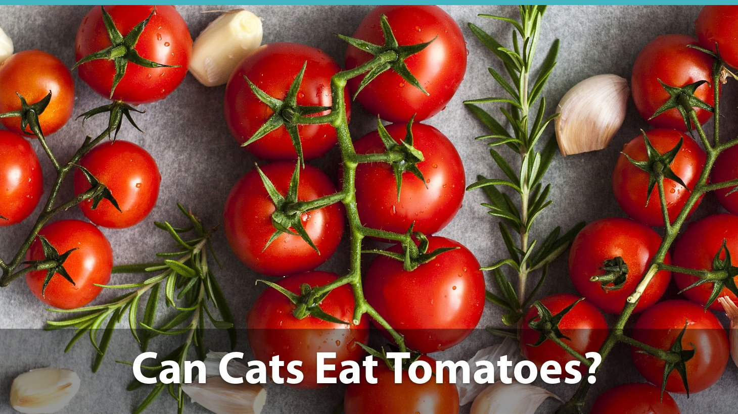 Ritzy Can Cats Eat Tomatoes Or Are Y Bad Can You Dogs Eat Tomato Sauce Does Dogs Eat Tomato Sauce houzz 01 Can Dogs Eat Tomato Sauce