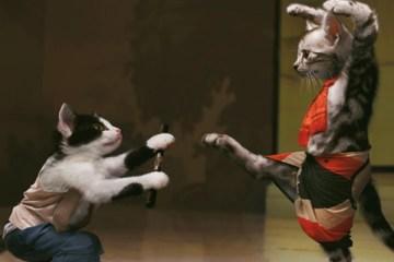 kattenfilm