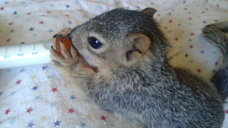 Squirrel Update