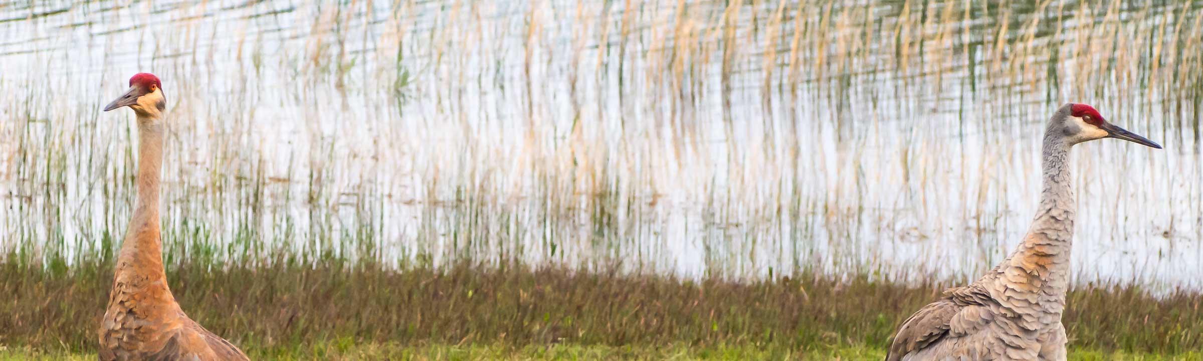 banner-cranes-lq