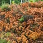 Autumn orange ferns