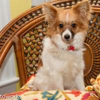 Stella – Adopted April 2014