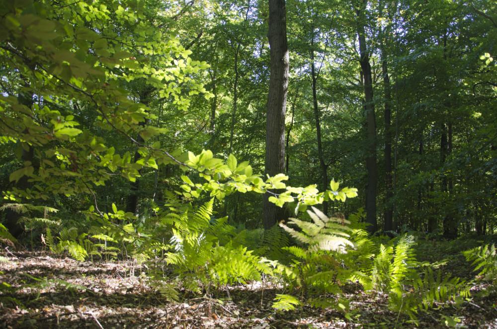 Engager son entreprise dans la reforestation : des bonnes pratiques pour le reboisement en France