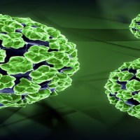 Find Out What Is Human Papillomavirus