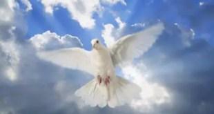 """Bosquejos Biblicos - Las cuatro """"P"""" de Dios"""