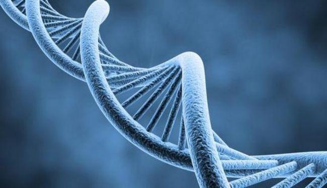 Quando la forma ignorò Darwin: introduzione alla scienza della morfologia. Parte 3