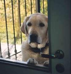 dog at the door