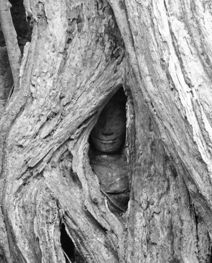 Pictures of trees at Ta Prohm hidden statue (422x525)
