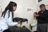 Desde Este Martes La CDMX Ya Cuenta Con Su Primer Hospital Público Para Mascotas